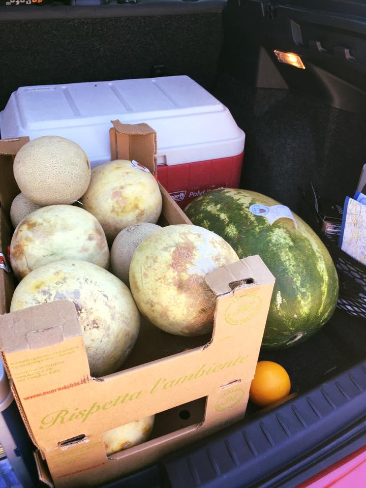 meloenen-aanwist